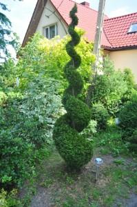 drzewkaozdobne4